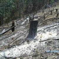Ecocidio en Chichihualco; intereses millonarios del narco, un diputado y falsos ejidatarios