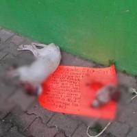Grupos del crimen organizado decapitan a perros y los abandonan con narco mensajes, en Acapulco