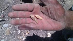 Comité encuentra huesos en fosas ya exploradas (2)