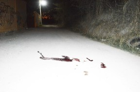 """La avenida """"de la muerte"""" está marcada por la sangre de las víctimas del crimen organizado. (Fotografía: José Molina/API)"""